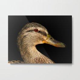 Portrait of a female Mallard Duck Metal Print