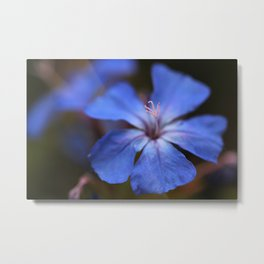 Forest Blue Metal Print