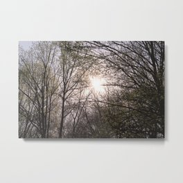 Tree and Sunset Photography Metal Print