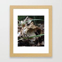 Settled Framed Art Print