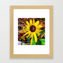 Yellow Black Eyed Susan Framed Art Print