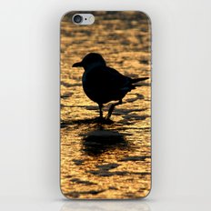 Beach Bird iPhone & iPod Skin