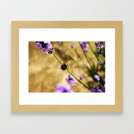 'Bumble Bee' by TDL Framed Art Print