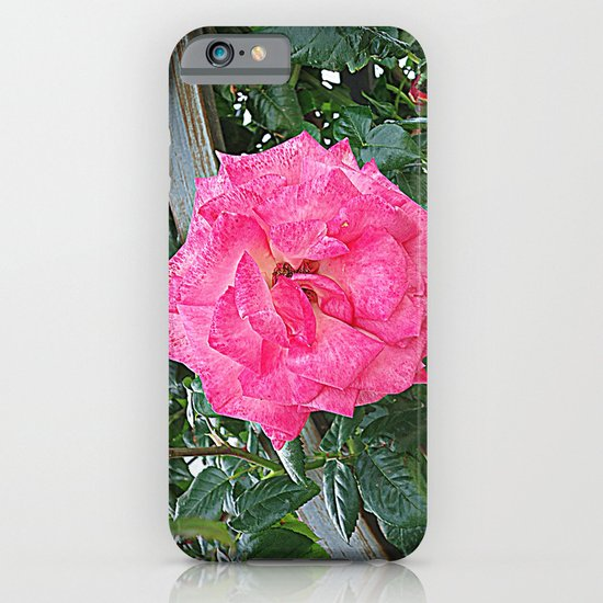 rosa rosa iPhone & iPod Case