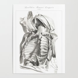 Human Anatomy Art Print CLAVICLE STERNUM CHEST Vintage Anatomy, doctor medical art, Antique Book Pla Poster