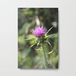 Purple Milk Thistle Wildflower - Jalama Beach Metal Print