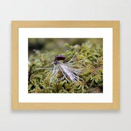 Grazing Snail Framed Art Print