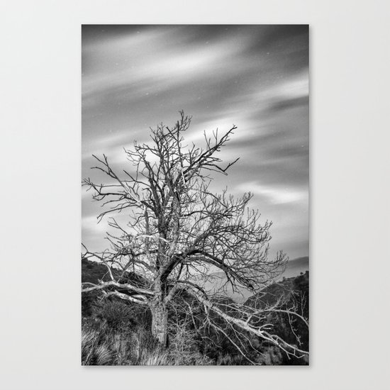 Old Mountain Tree under the stars Canvas Print
