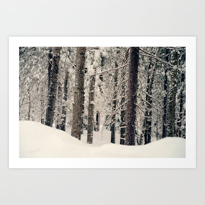 Winter Woods 1 Art Print
