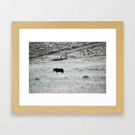 Horse in high desert grass Framed Art Print