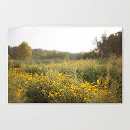 Tickseed View Canvas Print