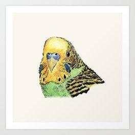 Prettyboy Parakeet Art Print