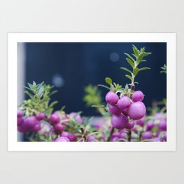 Boletes roses Art Print