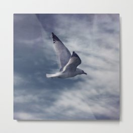 Jonathan Livingston Seagull Metal Print