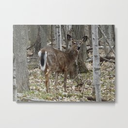 Smiley Deer Metal Print