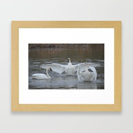 Swan Dance - Two out of Three Framed Art Print