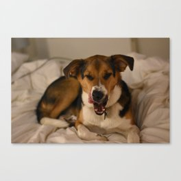 Morning Yawn Canvas Print