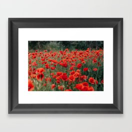 Red Poppies Framed Art Print