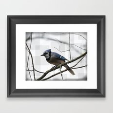 Winter Blue Jay Framed Art Print