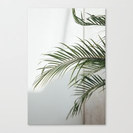 Palm Leaves Canvas Print