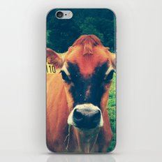 Cow 110 iPhone Skin