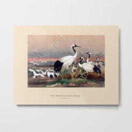 The Manchurian Crane Metal Print