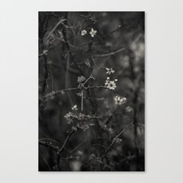 first blossoms - black'n white Canvas Print