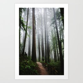 Forest Park Art Print