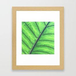 Hawaiian Tropical Jungle Leaf Macro View Framed Art Print