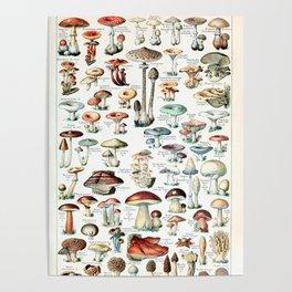 Adolphe Millot - Champignons pour tous - vintage poster Poster
