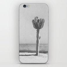 Cactus - in Black & White iPhone & iPod Skin