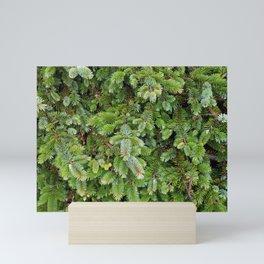 Evergreen Mini Art Print