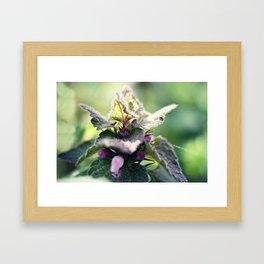 A Fuzzy Flower Framed Art Print