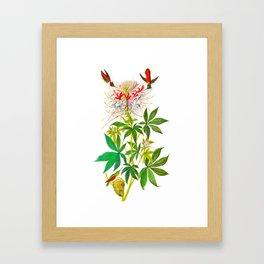 Ruff-Necked Hummingbird Framed Art Print