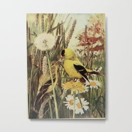 Neltje Blanchan - Bird Neighbours (1904) - American Goldfinch Metal Print