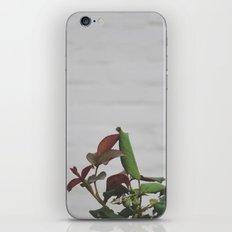 Rose Hips - No. 2 iPhone & iPod Skin