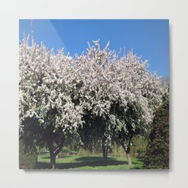 Crab Apple Trees in the Spring Metal Print