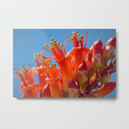Octotillo Blossoms by Reay of Light Photography Metal Print