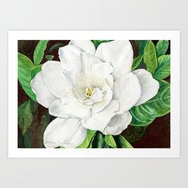 Watercolor Gardenia Art Print