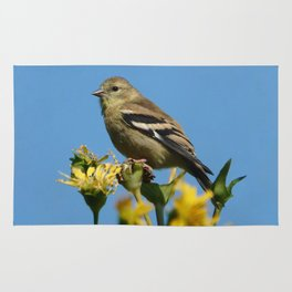 American Goldfinch Rug