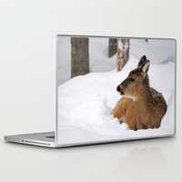 wildlife Laptop & iPad Skins featuring Winter Wildlife by MVision Photography
