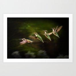 Humming Bird in Flight Art Print
