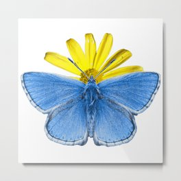 Adonis Butterfly Metal Print