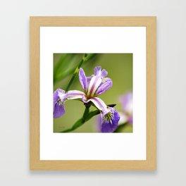 Wild Iris Flower Framed Art Print