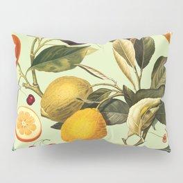 Vintage Fruit Pattern XIII Pillow Sham