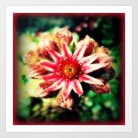 succulent Art Prints featuring Succulent by Eve Penman