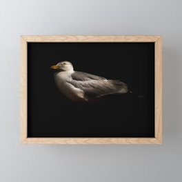 Herring Gull Framed Mini Art Print