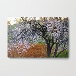 """Flowering Almond"". At Sunset Metal Print"