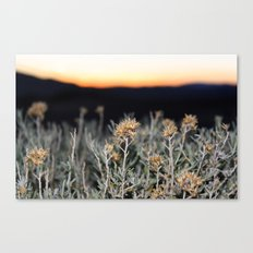 Sagebrush Canvas Print