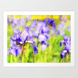 flower-iris-wild-flower-purple Art Print